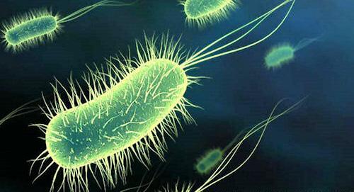 Jean-Michel la bactérie et ses amis.